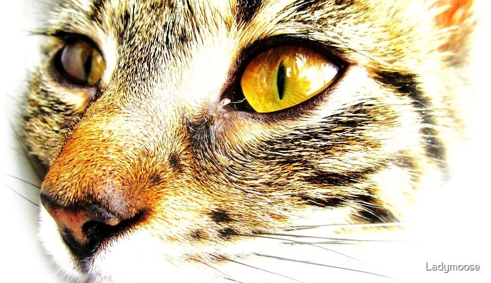 Golden Eye by Ladymoose