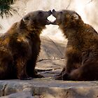 Grizzly Pair by Jay Gross