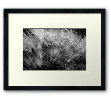 Dandelion Study #4 Framed Print