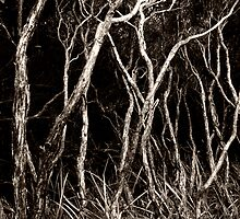 Blair Witch Revisited 2 by Jodi Turner