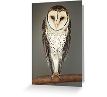 AUSTRALIAN MASKED OWL Greeting Card