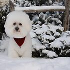Snow Angel  by Judy Grant
