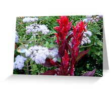 RED HEAD AND POM POMS Greeting Card