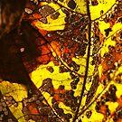 Autumn Leaf #3 by David Hawkins-Weeks