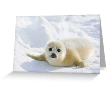 baby seal Greeting Card