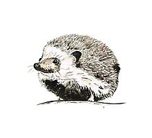Hedgehog watercolour and ink Photographic Print