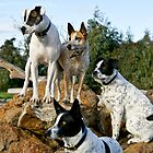 Georgie, Jessie, Cosmo and Dexter by dolmixedbreeds