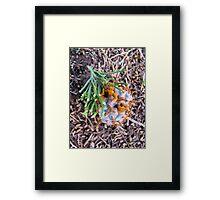 The Fungus Among Us Framed Print