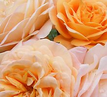roses peachy bunch by gaylene