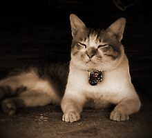 My Neighbour's Cat (1) by smile4me