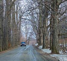 Big Maples Countru Road by marchello