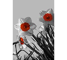 Curious Daffodils Photographic Print