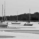 Song of Winter - Alexandria, Virginia by Matsumoto