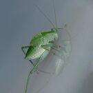 GrasshopperII by peterstreet