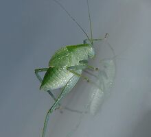GrasshopperII by peterstreet