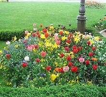 garden of tulips by Gipi Gopinath