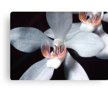 Orange Blossom Orchid Canvas Print