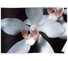 Orange Blossom Orchid Poster