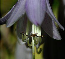 Hosta Flower by Deborah  Benoit