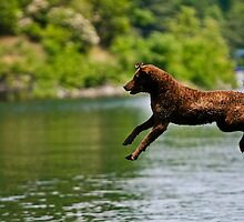 Jump by KerrieT