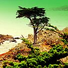 CARMEL CALIFORNIAS ....LONE CYPRESS TREE by davesdigis