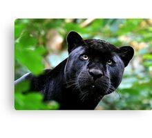 Black Jag Canvas Print