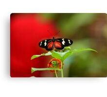 Butterfly on a perch Canvas Print