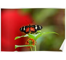 Butterfly on a perch Poster