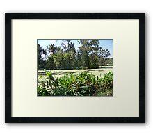 Audobon Park Swamp Framed Print