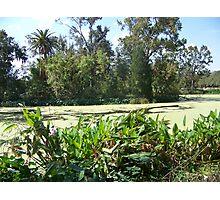 Audobon Park Swamp Photographic Print