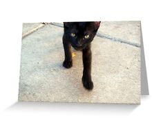 Feral Kitten Greeting Card