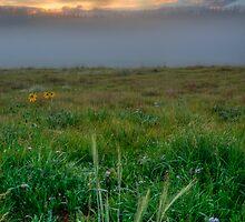 Misty Meadow Sunrise by EvaMcDermott