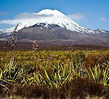 Mt Ruapehu and Tongararo, New Zealand by Lisa Wilson