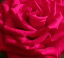 Romantic Red Rose Sticker