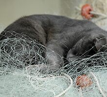 Caught cat napping by wesleyj1954