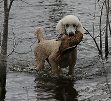 Standard Poodle with a duck by Pamela Kadlec