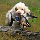 Zelda fetches a duck by Pamela Kadlec