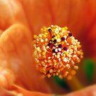 Tangerine Dream by Amanda White