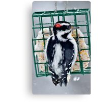 Hairy Woodpecker in the Storm Canvas Print