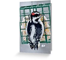 Hairy Woodpecker in the Storm Greeting Card