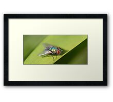 Warming Up Framed Print