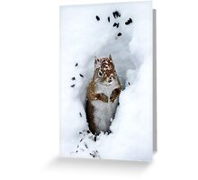 North America Red Squirrel Greeting Card
