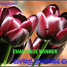 Spring, Glorious Spring - Challenge Winner Banner by BlueMoonRose