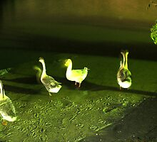 Geese Dance by DJanisRosen