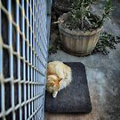 The Cat Sat on the Mat by Clare Colins