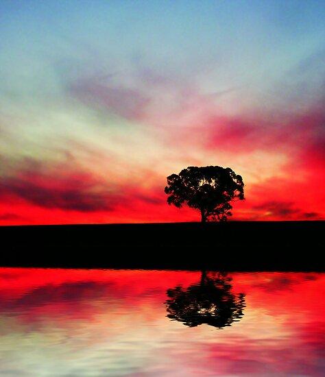 Dream Pool by Craig Shillington