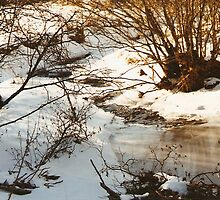 Winter Water Beauty by Cathy Cale