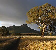 Wild Light over the Grampians, Dunkeld, Australia by Michael Boniwell