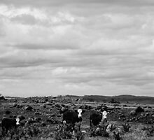 High Country Grazing B & W by D-GaP