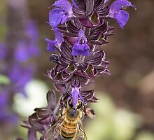 Bee-low by John Sharp